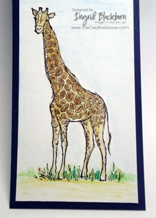 Zoo Review 001 Giraffe CU