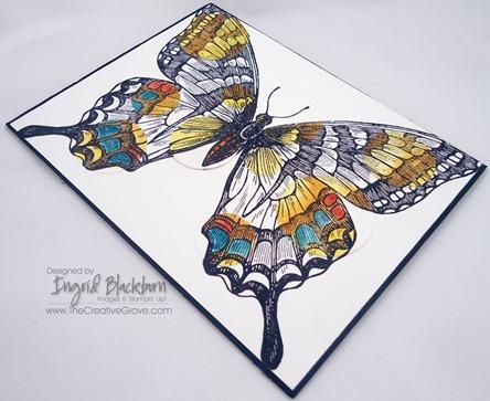 Swallowtail 007 Angle