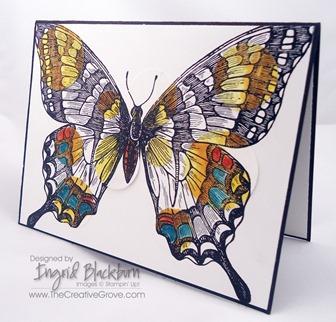 Swallowtail 007 Main